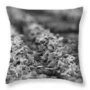 Agriculture- Soybeans 2 Throw Pillow