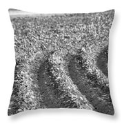 Agriculture- Soybeans 4 Throw Pillow
