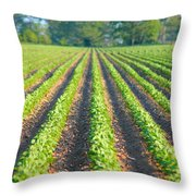 Agriculture-soybeans 5 Throw Pillow
