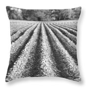 Agriculture-soybeans 6 Throw Pillow