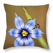 Alabama Blue-eyed Grass Wildflower - Sisyrinchium Angustifolium Throw Pillow