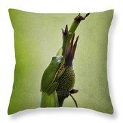 Alabama Green Tree Frog - Hyla Cinerea Throw Pillow
