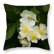 Alabama Wildflower Roses - Rosa Multiflora Throw Pillow