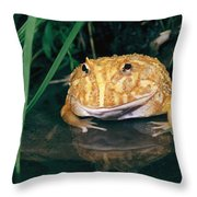 Albino Horned Frog Throw Pillow