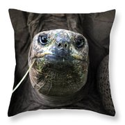 Aldabra Tortoise Throw Pillow