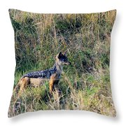 Alert Jackal Throw Pillow