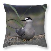 Aleutian Tern Sterna Aleutica On Ground Throw Pillow