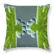 Algae Binary Fission Throw Pillow by M. I. Walker
