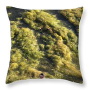 Algae Bloom In A Pond Throw Pillow