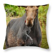 Algonquin Bull Throw Pillow