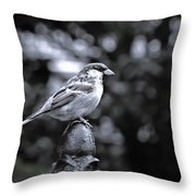 Alighten Throw Pillow