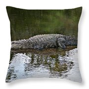 Alligator 1 Throw Pillow