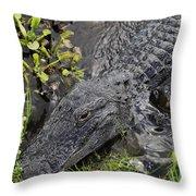 Alligator Alley Friend  Throw Pillow