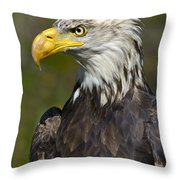 Almost There - Bald Eagle Throw Pillow