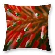Aloe Bloom Throw Pillow