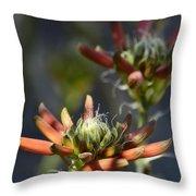 Aloe Vera Blossoms  Throw Pillow
