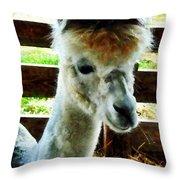 Alpaca Closeup Throw Pillow