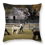 Alpacas In Vermont Throw Pillow