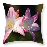 Amaryllis Belladonna Throw Pillow