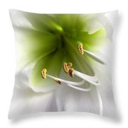 Amaryllis  Throw Pillow by Jane Rix