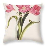 Amaryllis Purpurea Throw Pillow