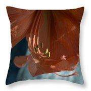 Amaryllis Up Close Throw Pillow