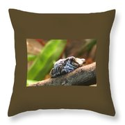 Amazon Milk Frog Throw Pillow