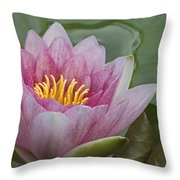 Amazon Water Lily Victoria Amazonica Throw Pillow