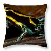 Amazonian Poison Frog Throw Pillow