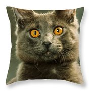 Amber-eyed Domestic House Cat Throw Pillow