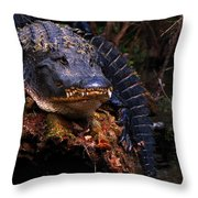 American Alligator On A Cypress Tree Throw Pillow