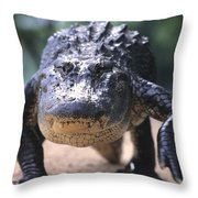 American Alligator Walking On A Trail Throw Pillow