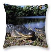American Alligators Throw Pillow
