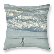 American Avocet In Non-breeding Plumage      Recurvirostra Americana  Throw Pillow
