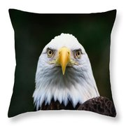American Bald Eagle Haliaeetus Throw Pillow