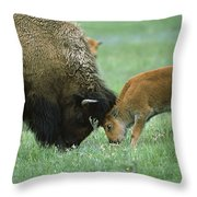 American Bison Cow And Calf Throw Pillow