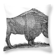American Buffalo Throw Pillow