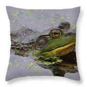 American Bullfrog Throw Pillow
