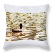 American Coot Floating By Throw Pillow