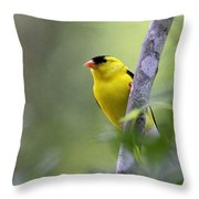 American Goldfinch - Peaceful Throw Pillow
