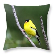 American Goldfinch - Single Male Throw Pillow