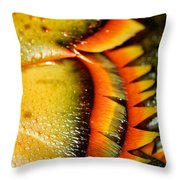 American Lobster Closeup In Chatham On Cape Cod Throw Pillow