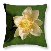 American Lotus Nelumbo Lutea Opening Throw Pillow