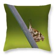 American Snout Butterfly - Libytheana Carinenta Throw Pillow