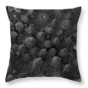 American Toad Skin, Sem Throw Pillow by Ted Kinsman