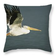 American White Pelican Pelecanus Throw Pillow