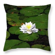 American White Waterlily Throw Pillow