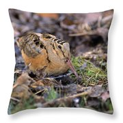 American Woodcock Bird Throw Pillow