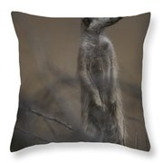 An Adult Meerkat Suricata Suricatta Throw Pillow
