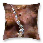 An Aeolid Nudibranch On An Orange Throw Pillow
